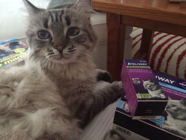 Mouillette  mon chat et le stress : la solution Feliway